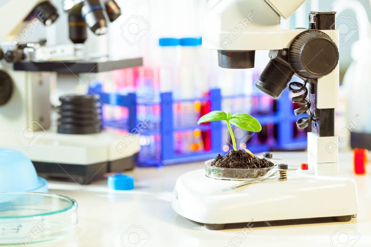 Kostenlose bild mikroskop wissenschaft biologie medizin