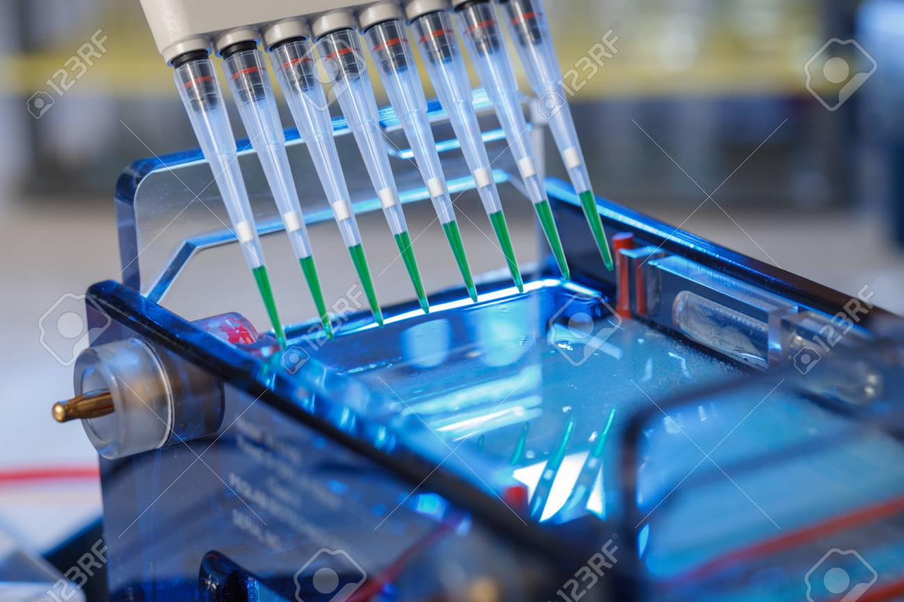 loading amplified DNA samples to agarose gel with multichannel pipette - 92318619