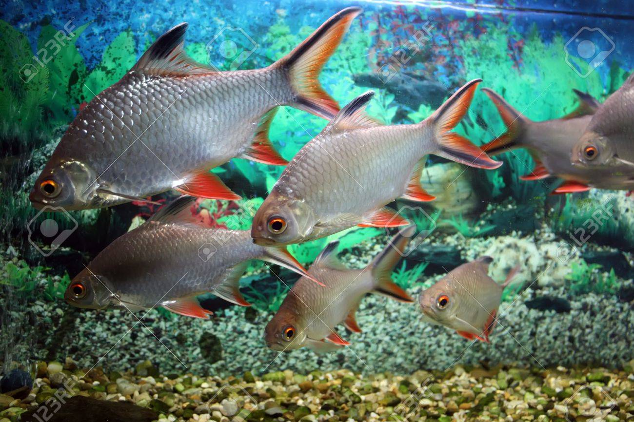 Group of fishes in aquarium tank Stock Photo - 21493734