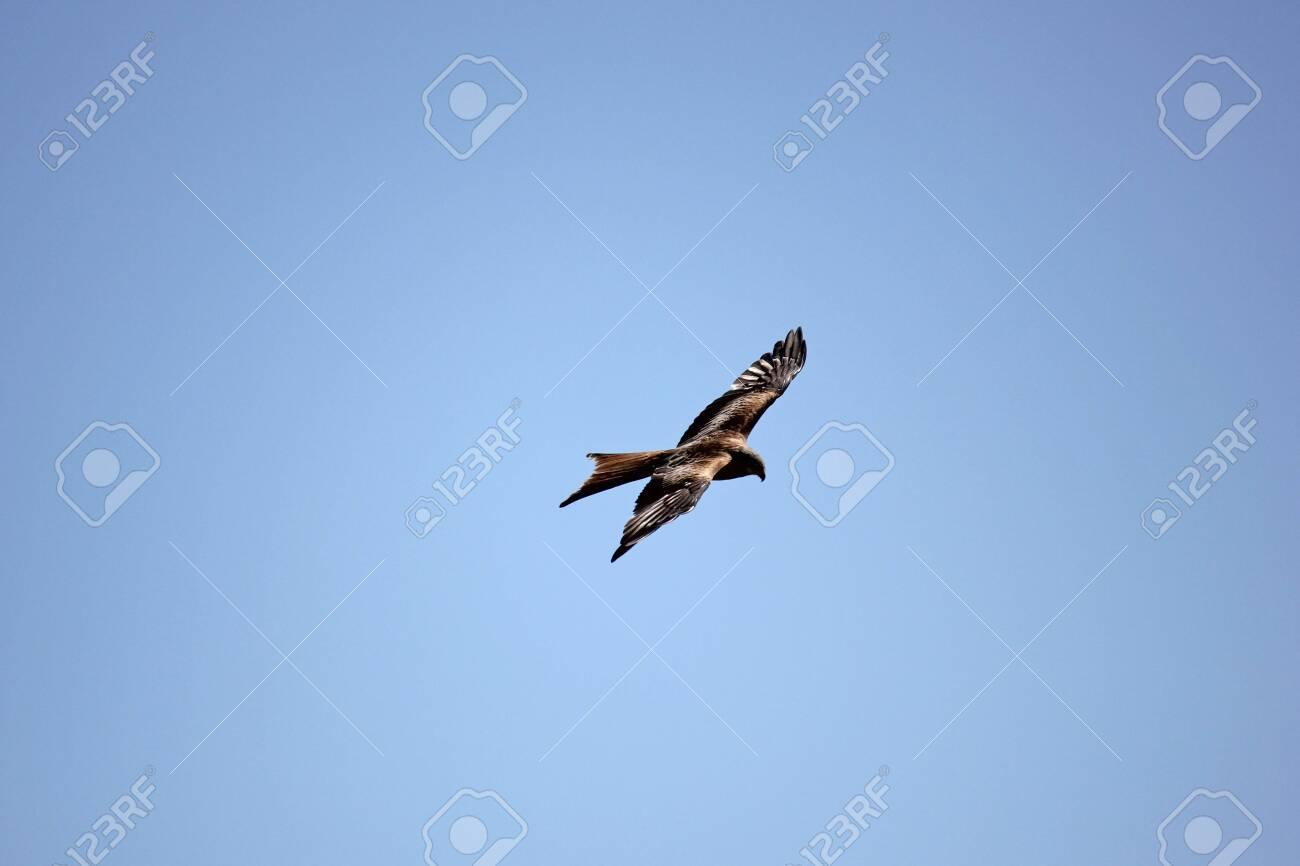 Kite up in the sky - 122791971