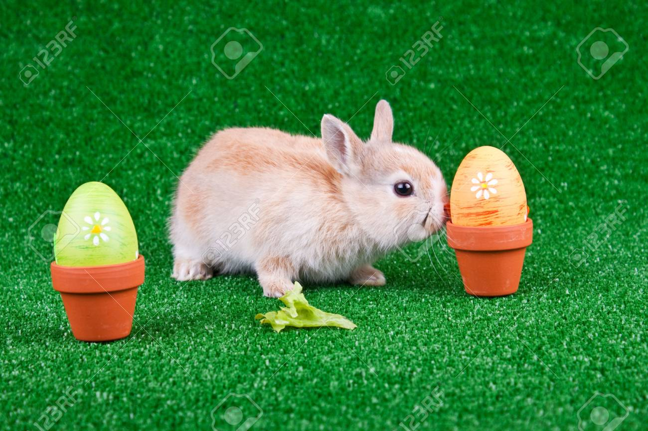 one little rabbit playing between easter eggs Stock Photo - 6667455