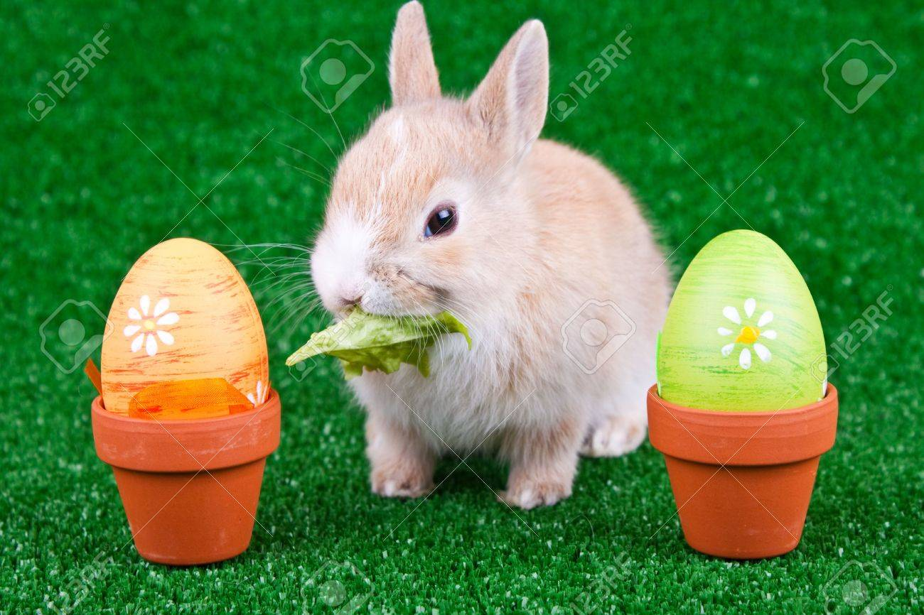 easter eggs and  domestic rabbit eating salad Stock Photo - 6667734