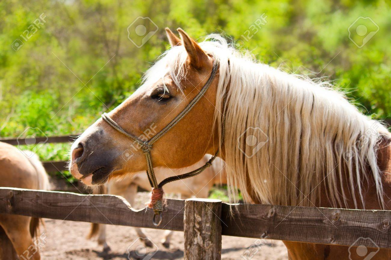 closeup of a beautiful brown horse behind fence Stock Photo - 7075716