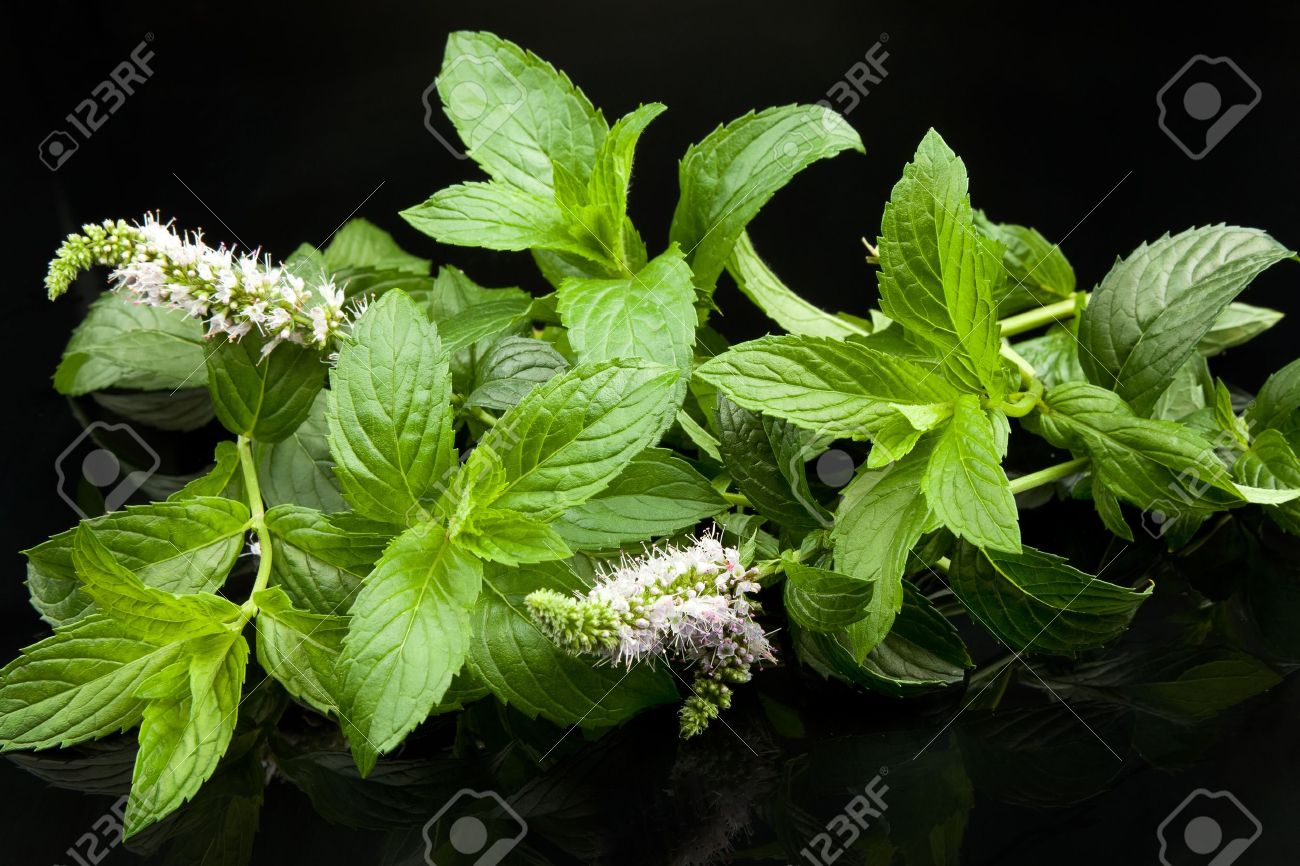 green mint leaves, on black background Stock Photo - 10975001