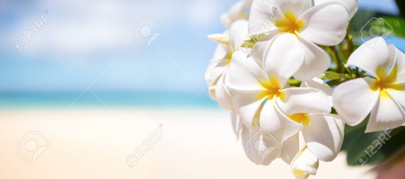 White tropical flower frangipani over beautiful beach stock photo stock photo white tropical flower frangipani over beautiful beach mightylinksfo