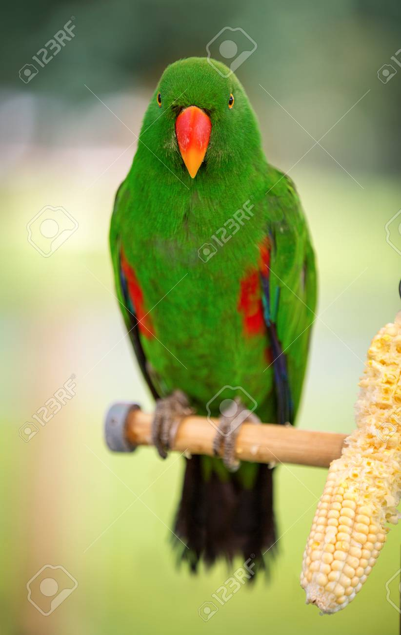 79095619-colorful-parrot-looking-at-came
