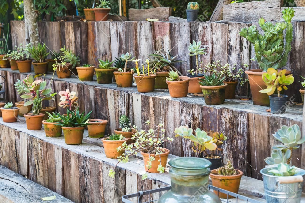 Pot de cactus divers sur une étagère en bois dans le jardin