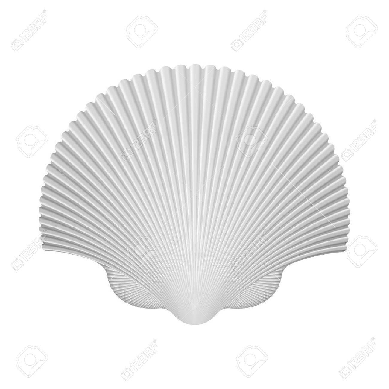 白いベクトル イラストレーション上分離したホタテ貝殻のイラスト素材