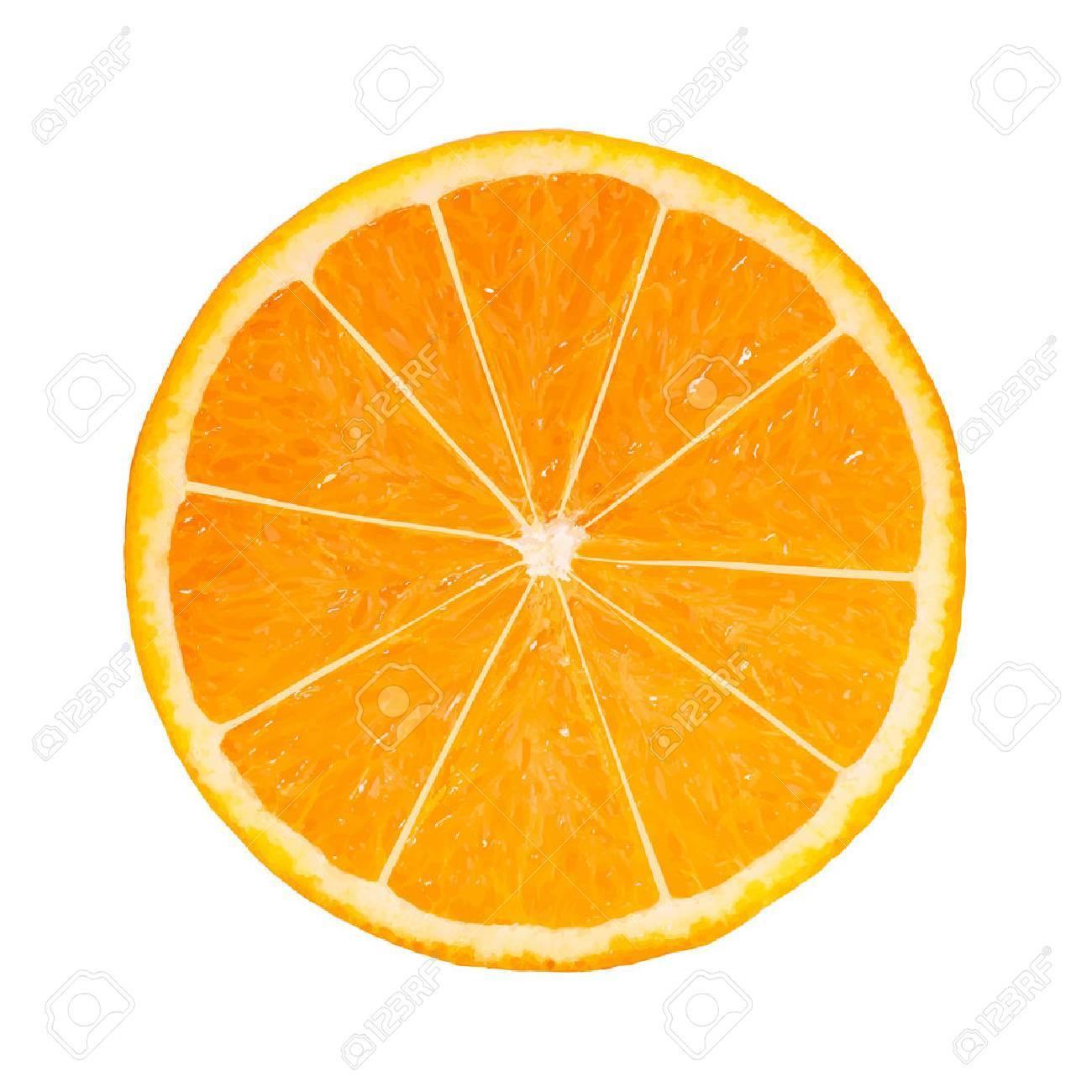 Photo-realistic Orange Slice  Vector Illustration
