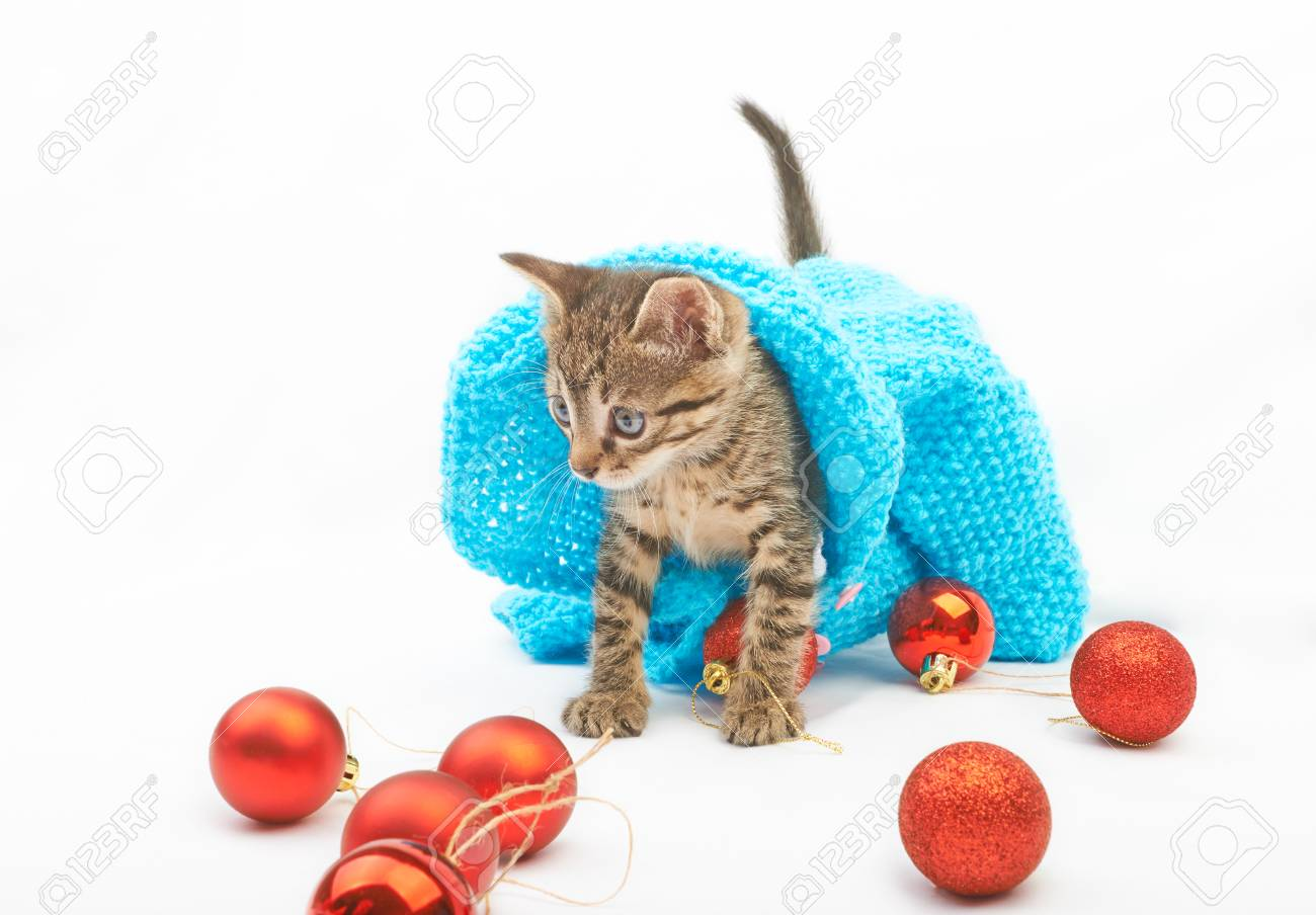 Soft Fluffy Kitten In Blue Sweater Playing With Christmas Balls ...