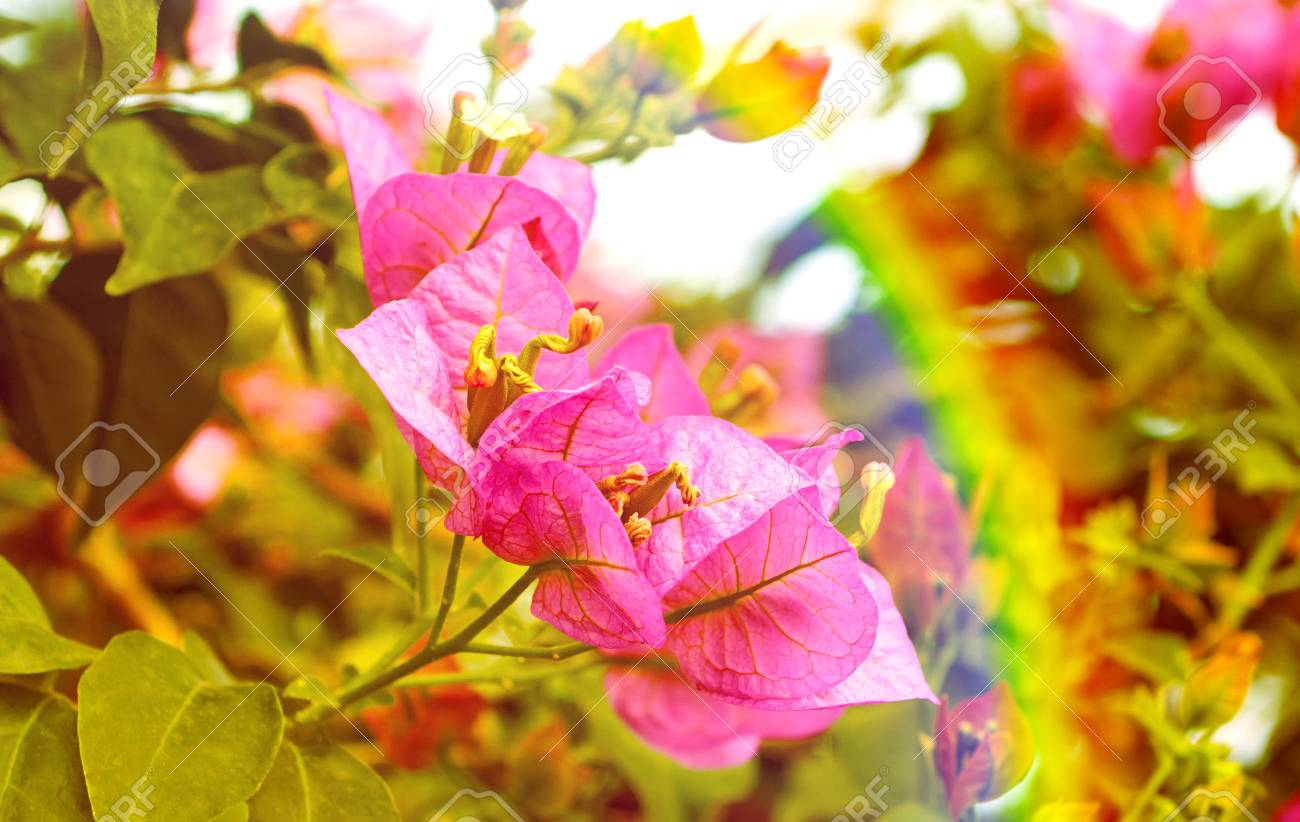 Flowers decorative pink bells and rainbow nature background stock flowers decorative pink bells and rainbow nature background stock photo 60141606 mightylinksfo