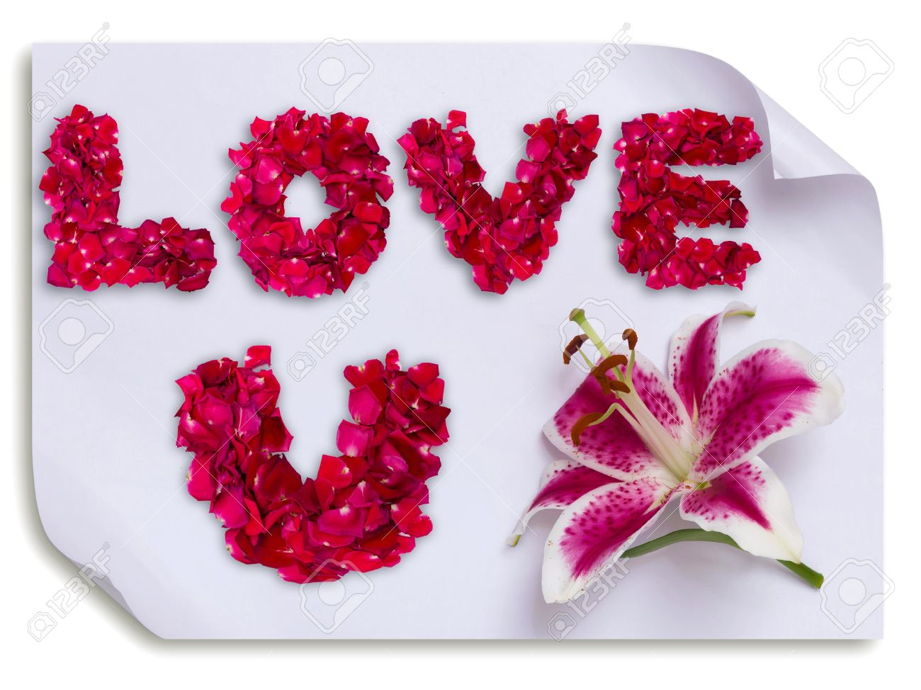 Love You Word Made From Red Rose Petals And Lily Flower On Paper