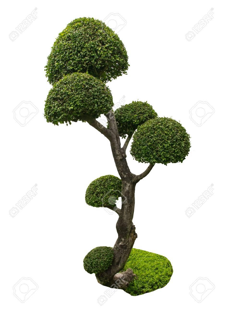 Baum Garten Garten Form Pflanze Geformt Bonsai Alte Kleine