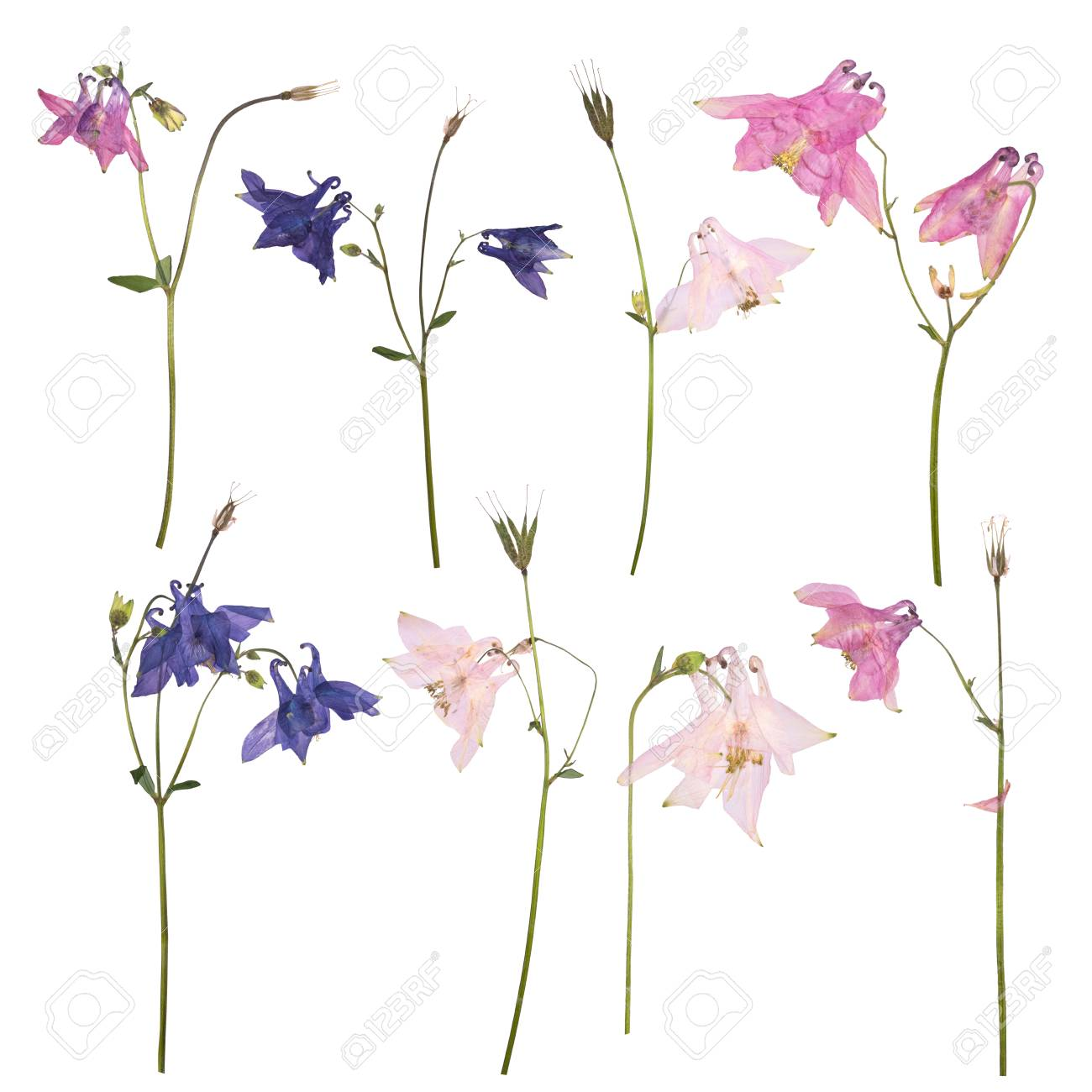 Set Of Dried And Pressed Flowers Of A Pink Blue And Purple