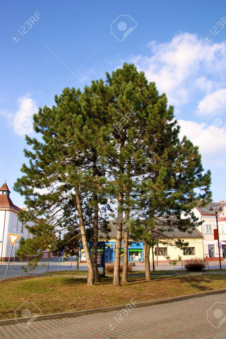 trees at square Stock Photo - 18750733