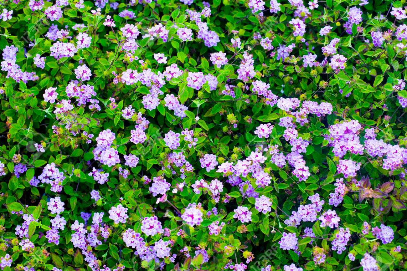 tiny purple flowers  flower, Beautiful flower
