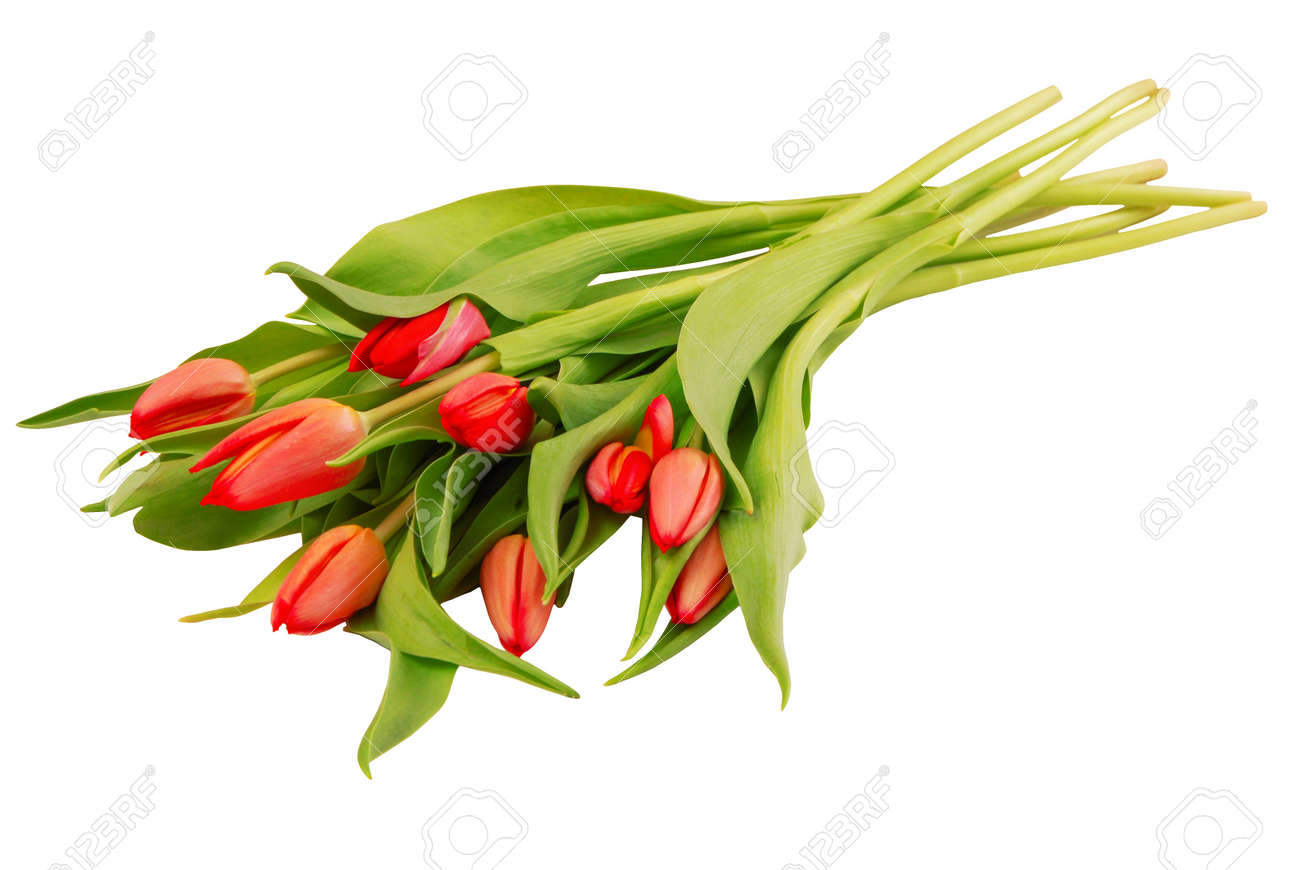 bouquet of tulips on white background, isolated red flowers, beautiful buds, romantic gift as single object, summer bloom, spring bloosom, red and green colors - 168810736