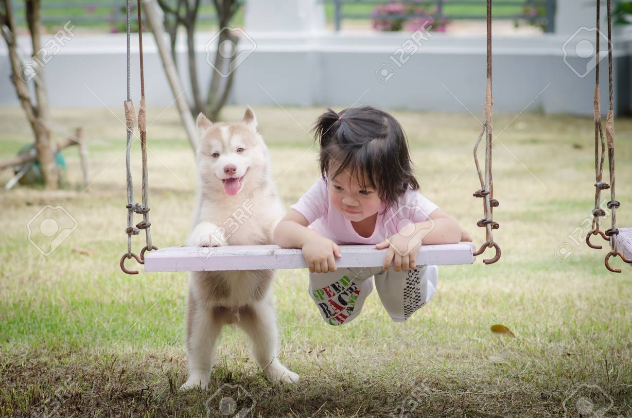 Asian Baby Baby On Swing With Siberian Husky Puppy Stock Photo Picture And Royalty Free Image Image 42525373