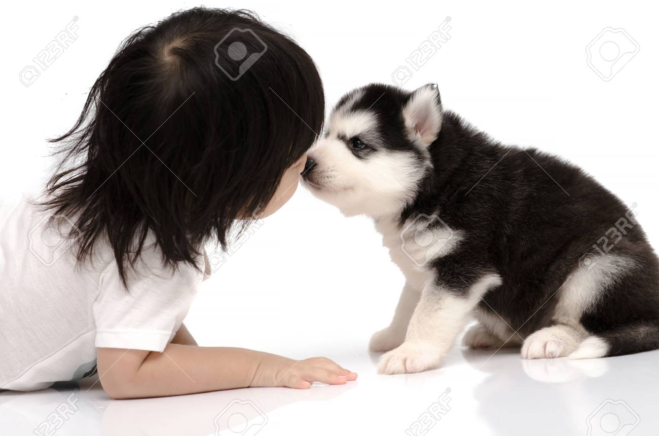 Little Asian Baby Kissing Siberian Husky Puppy On White Background Stock Photo Picture And Royalty Free Image Image 33692540