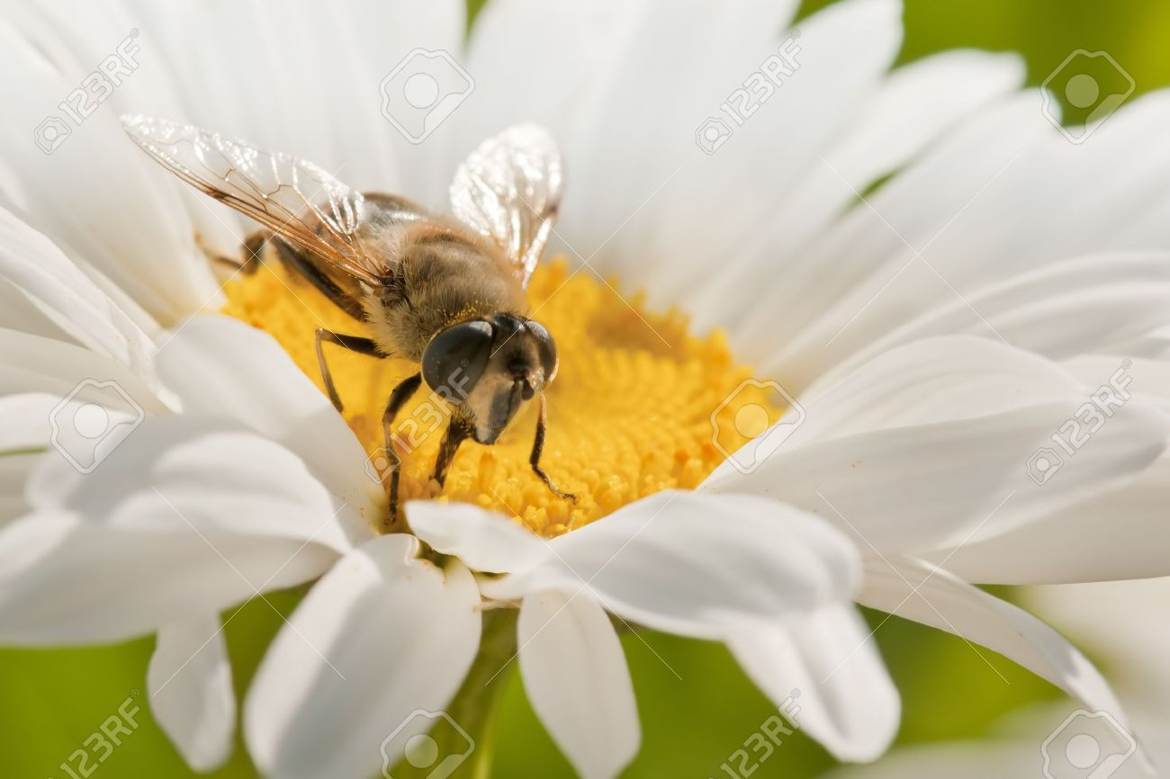 the bee in flower Stock Photo - 9831330