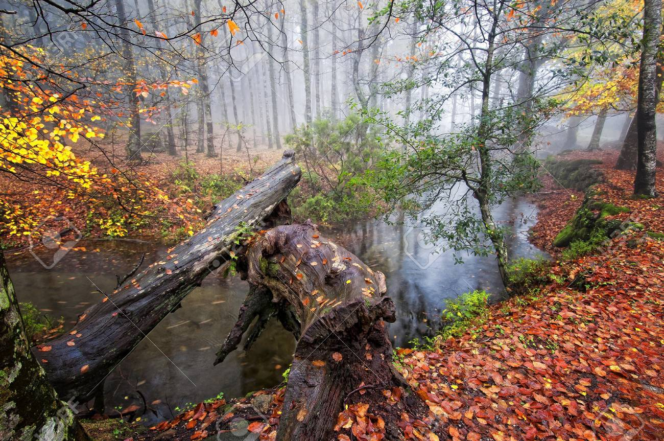 Ger�s N. P. Portugal in beautiful Autumn colors Stock Photo - 11079750