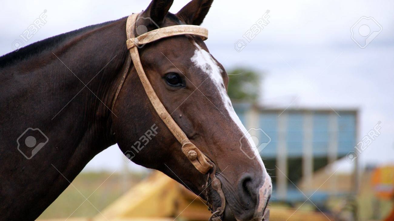 Horse Stock Photo - 17620521