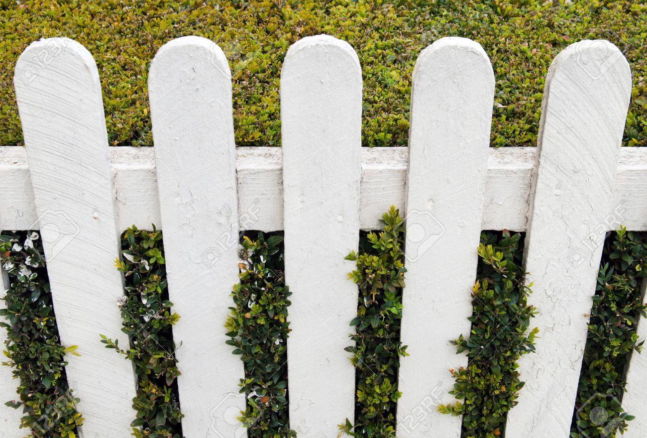 Petite Cloture De Jardin Blanche clôture blanche avec haie de verdure dans un jardin petite maison