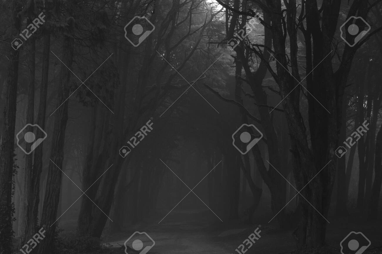The mystical fog of the Sintra forest - 133600914