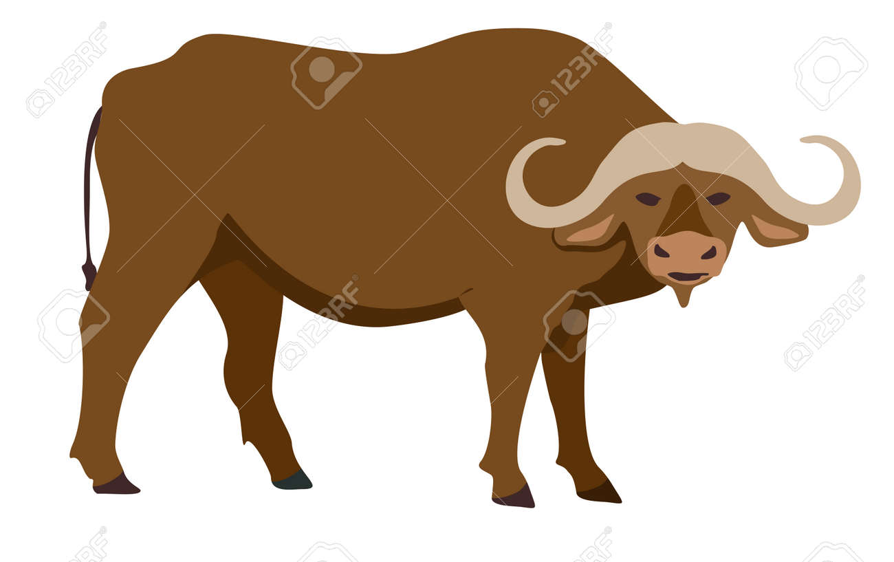 Buffalo icon. Vector illustration of African buffalo, standing, in flat style. Isolated on white. Isolated icon. - 169743660