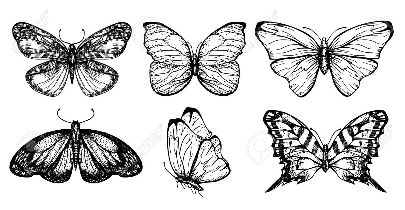 Collection of butterfly drawings for your design. Hand drawn sketch set of insects. Monochrome image of butterflies. Vector sketch. - 169743663