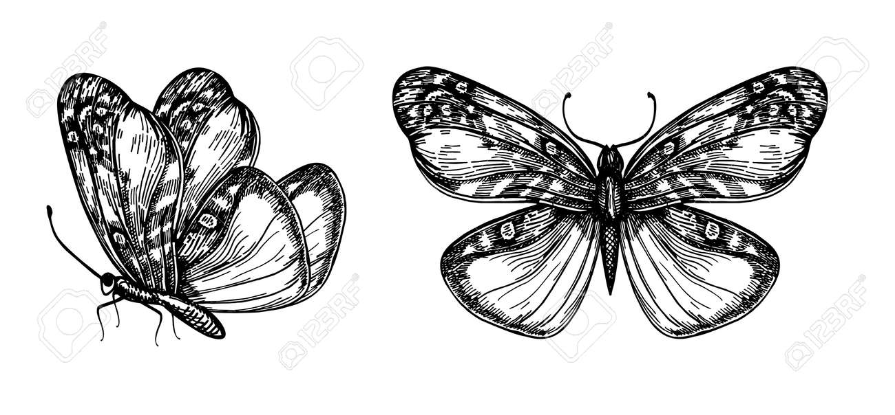 Set of vector hand drawn butterflies for design Vector hand illustration of butterflies with open and folded wings - 169743705