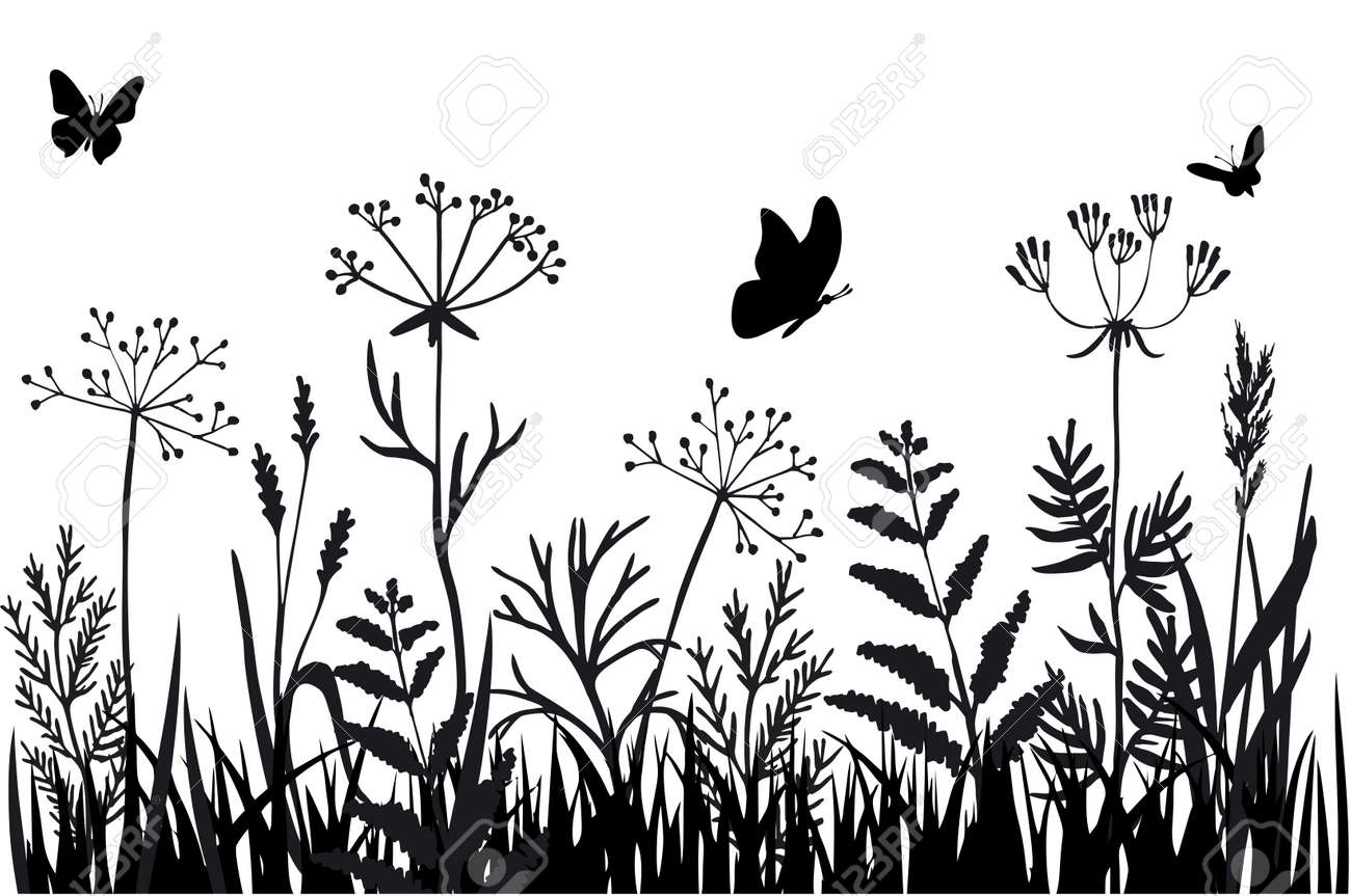 Black silhouettes of grass, flowers and herbs isolated on white background. Hand drawn sketch flowers and insects. Background herbs natural silhouette. Vector - 169743720