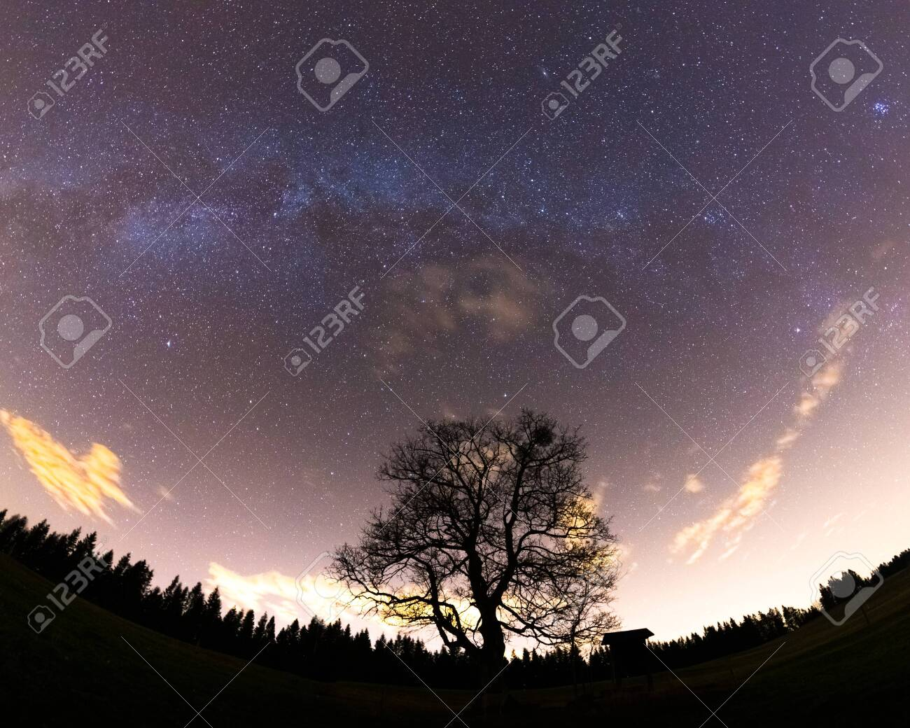 The Milky Way captured wide-spread along with the treetops with a yellow-orange glow on the horizon and lots of stars in the sky during a full night. - 149160142