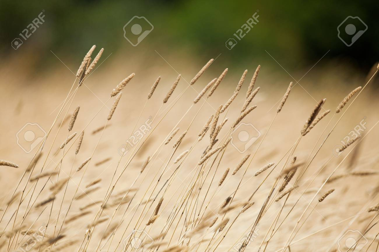 Weed on a marsh against green forest background Stock Photo - 7534092