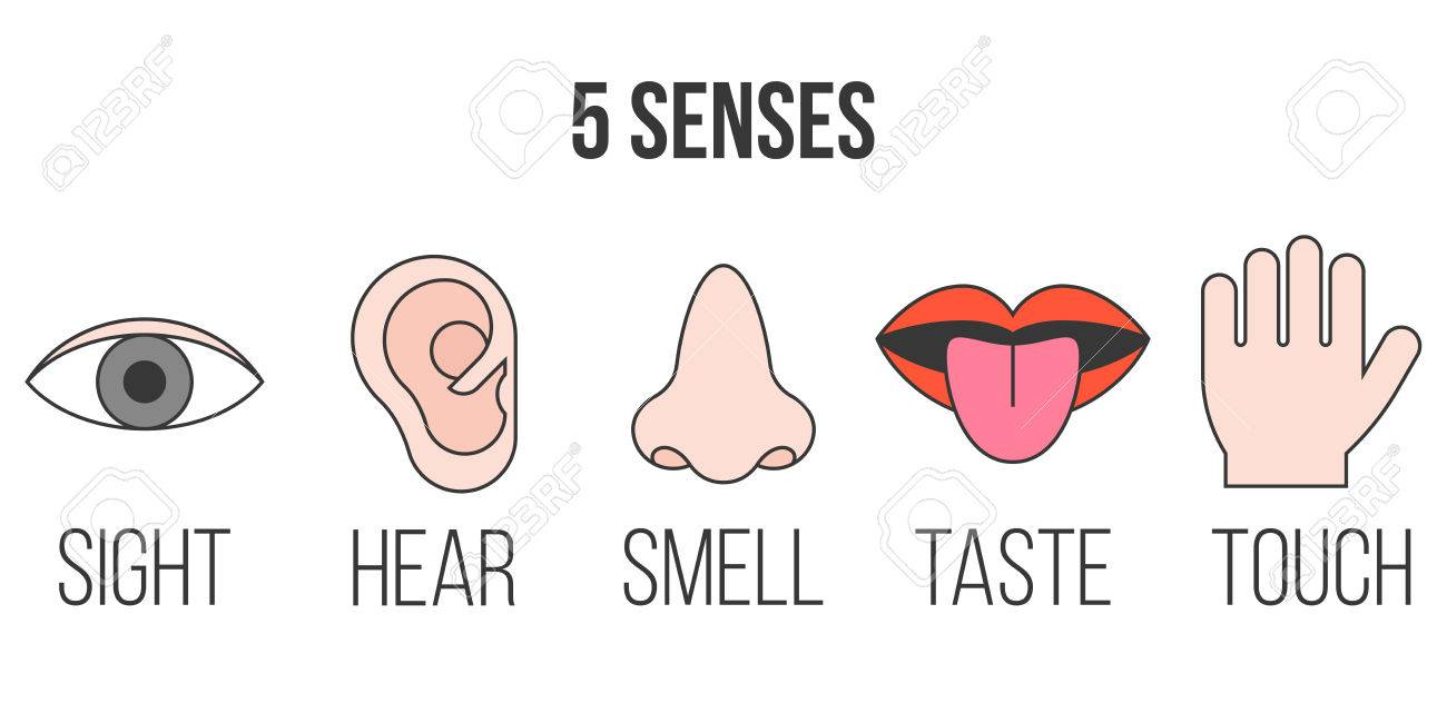 5 senses icon in outline collection with filled color royalty free rh 123rf com Clip Art Sense of Touch 5 sens clipart