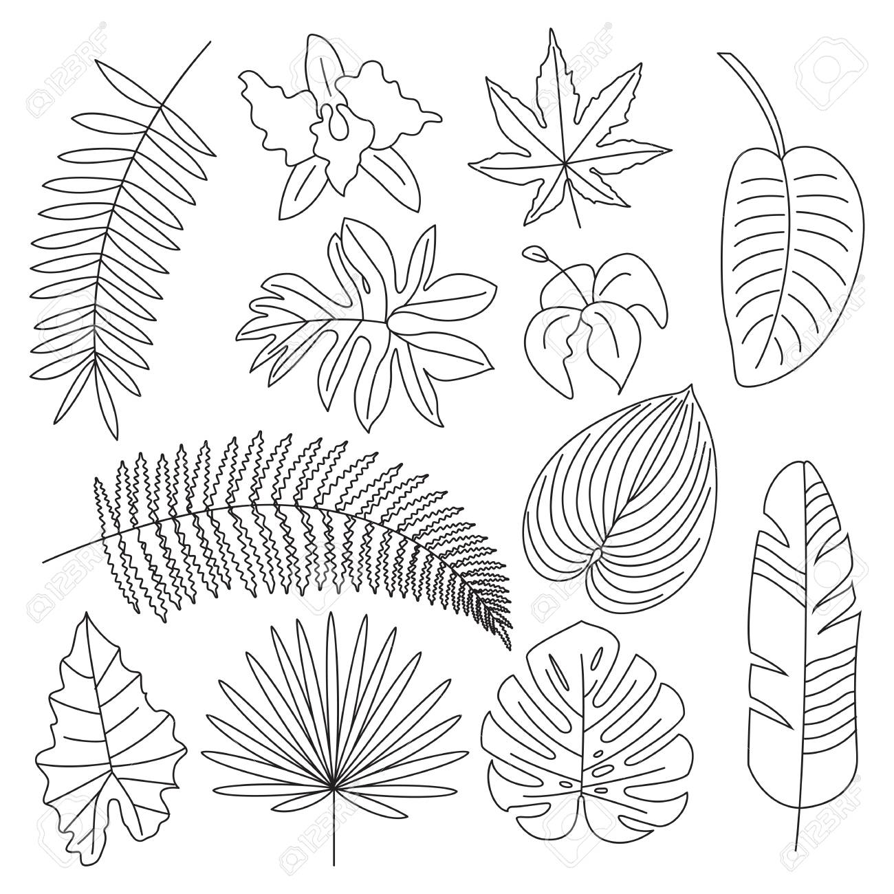 Tropical Leaves Floral Tropical Elements Outline Icons Royalty Free Cliparts Vectors And Stock Illustration Image 78351749 See more ideas about leaf outline, tropical, leaf template. tropical leaves floral tropical elements outline icons