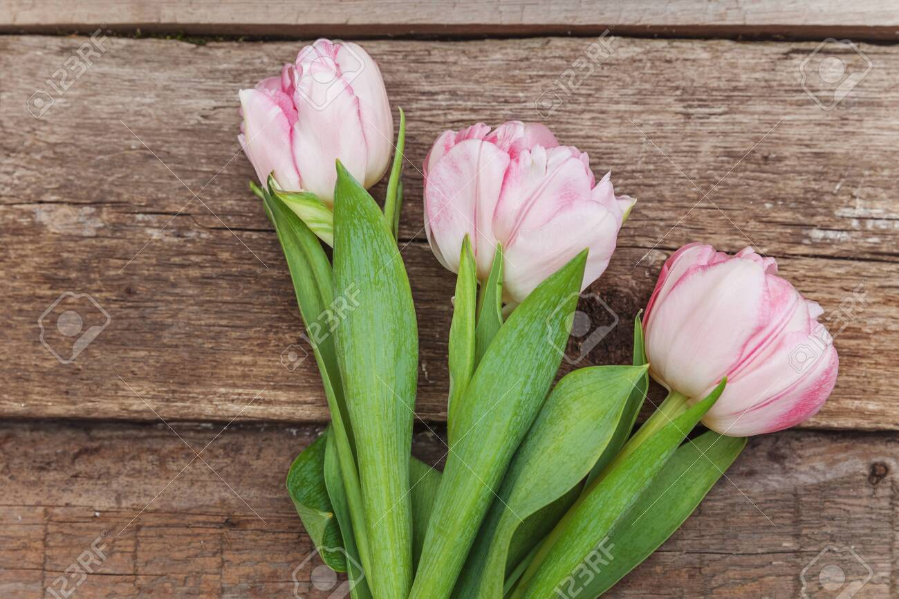 Spring greeting card. Bouquet of fresh light pastel pink tulips flowers on wooden background. Happy holiday easter mother day anniversary valentine day birthday concept. Flat lay top view copy space - 123094513