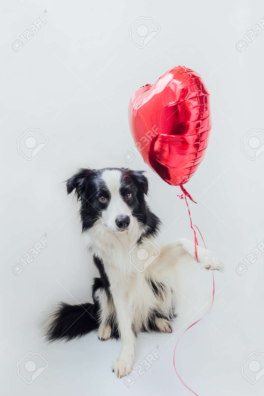 Valentine/'s Day Gift Valentine/'s Dog Shirt St Valentine/'s Pup of Hearts Tee
