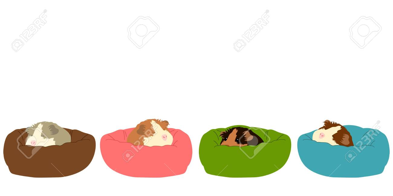 Picture of: Cute Mouse Sleeping Background And Borders Doodle Guinea Pig Royalty Free Cliparts Vectors And Stock Illustration Image 140090933