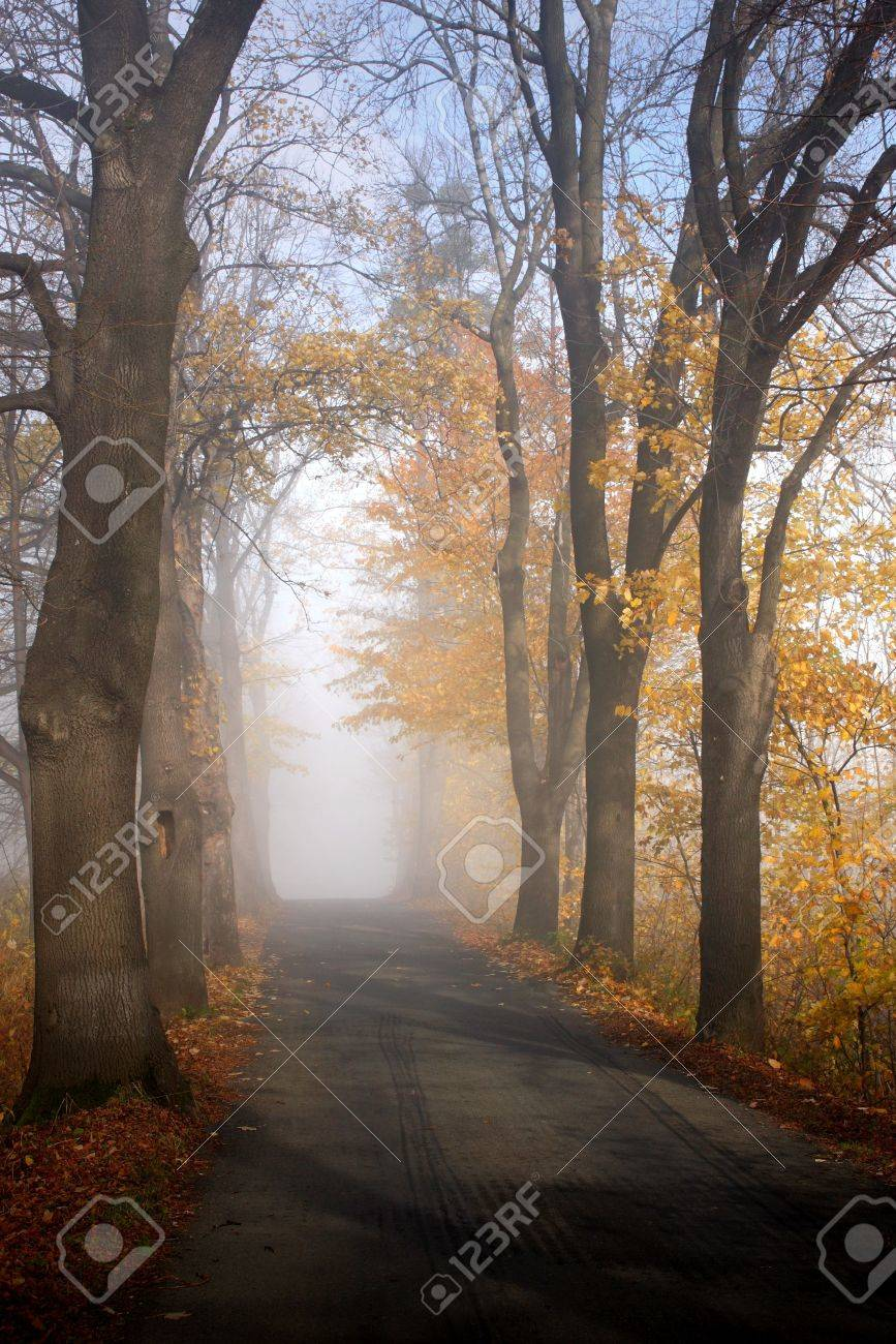 autumnal road Stock Photo - 4314264