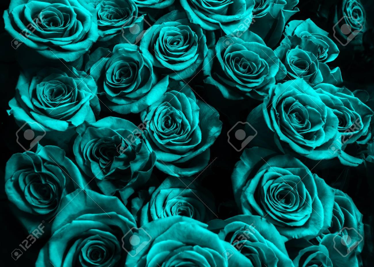 Fondo De Rosas Azules Aislados Sobre Fondo Negro Rosas Magníficas