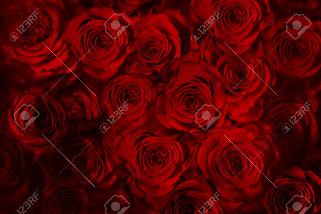 fresh red roses isolated on a black background.vertical greeting card with roses - 144655418