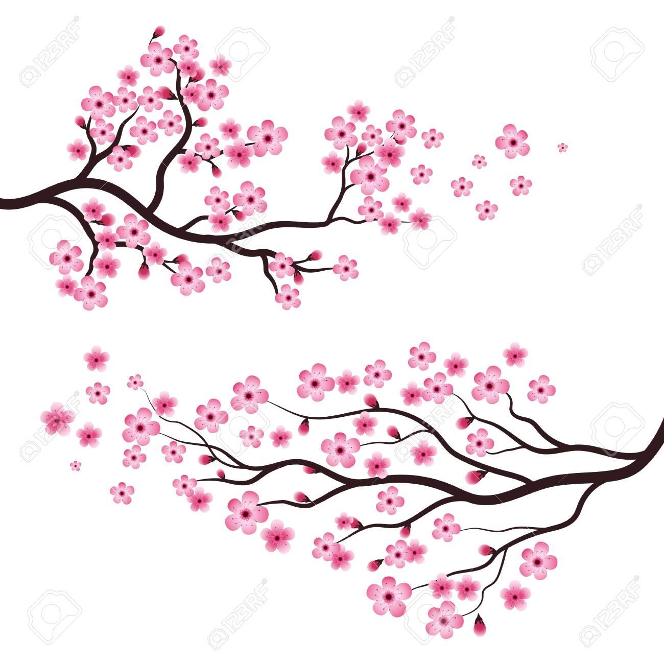 Sakura Beauty flower Vector icon illustration design - 151189701