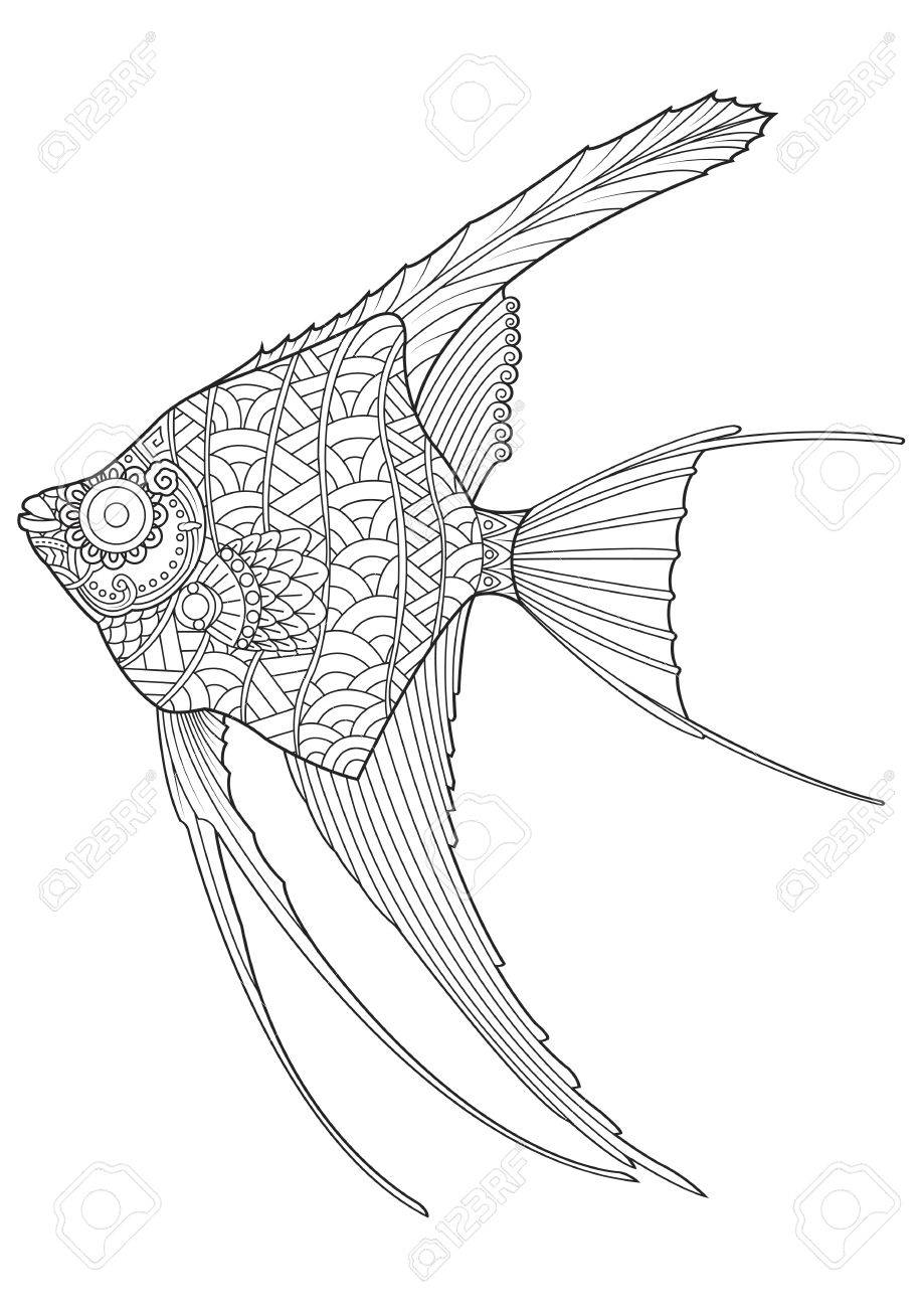 Angel Fish Coloring Page Stock Vector   56750281