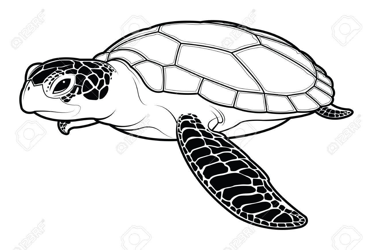 Dibujos Animados De Animales De Tortugas Marinas Ilustración De