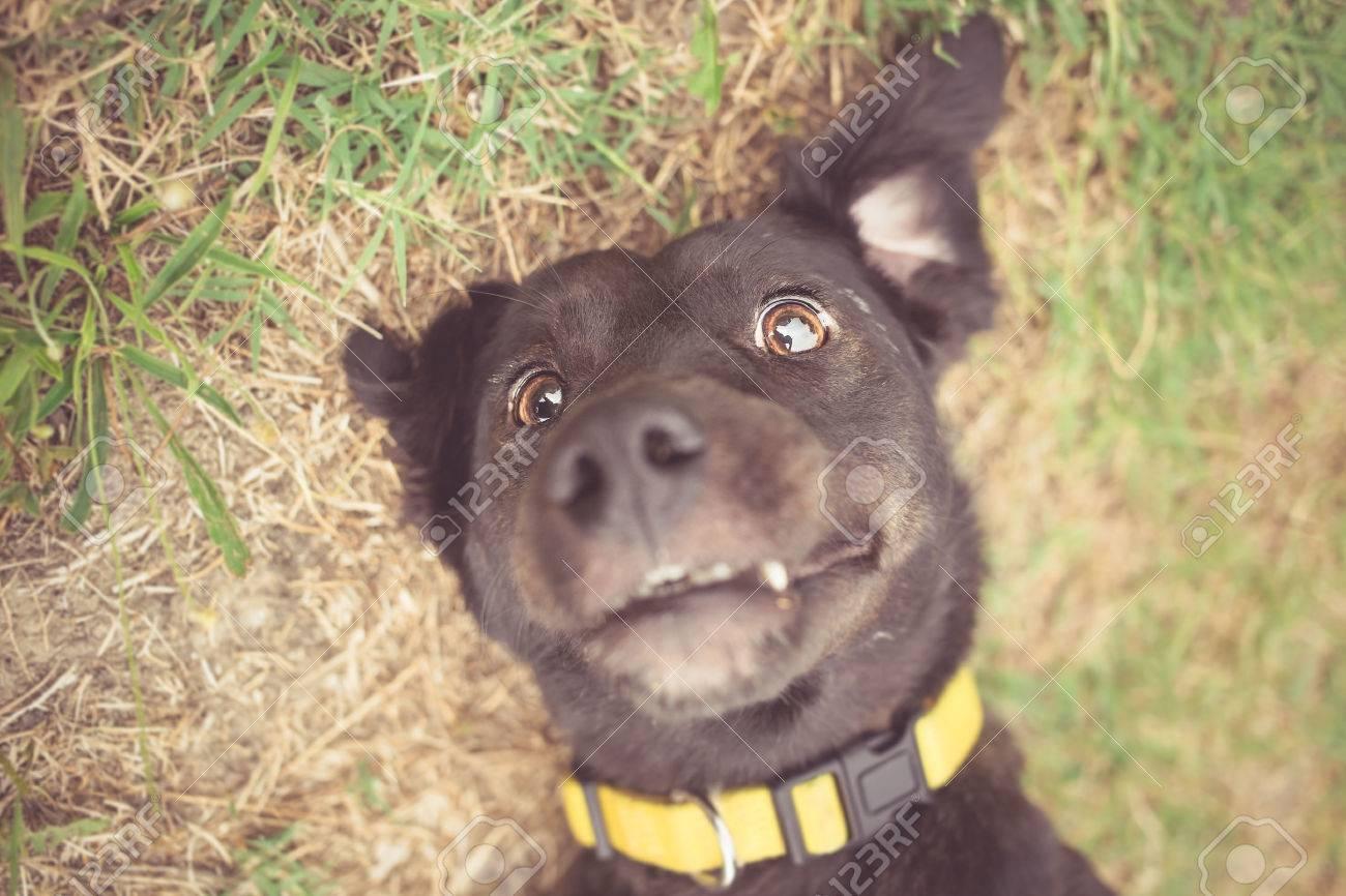Mixed breed dog selfie photo - 43806931