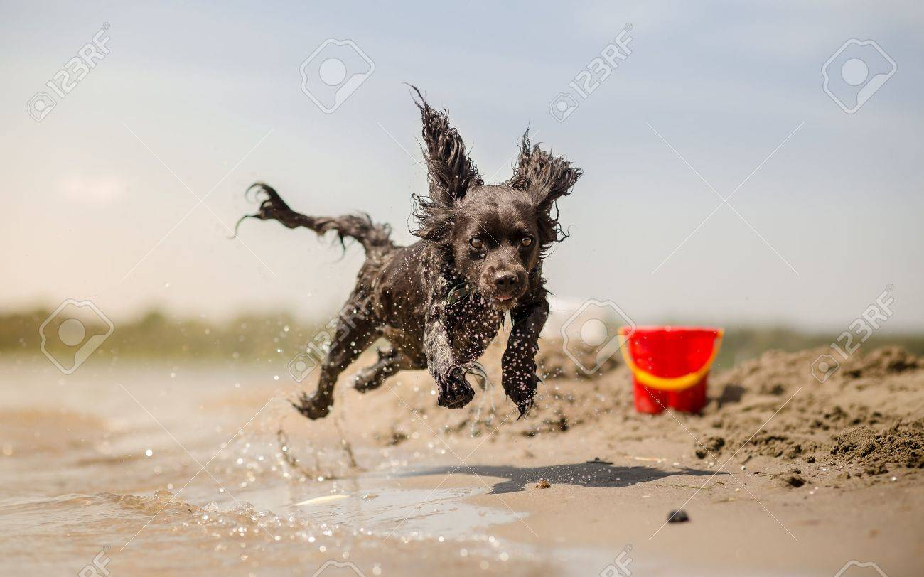 Dog running on the beach - 43857875