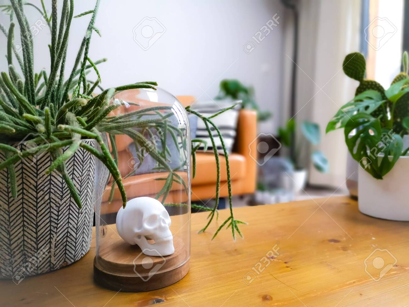 White Porcelain Animal Head In A Glass Bell Jar On A Wooden Coffee Table In A Light Modern Living Room With Numerous Plants Creating An Urban Jungle Lizenzfreie Fotos Bilder Und Stock