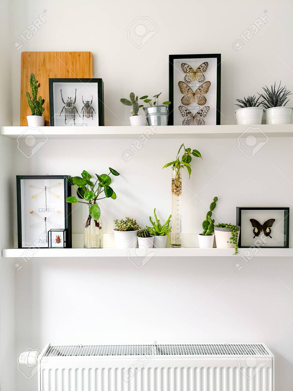 White hanging shelves with numerous plants and framed taxidermy insect art such as butterflies, beetles and dragonflies - 127147150