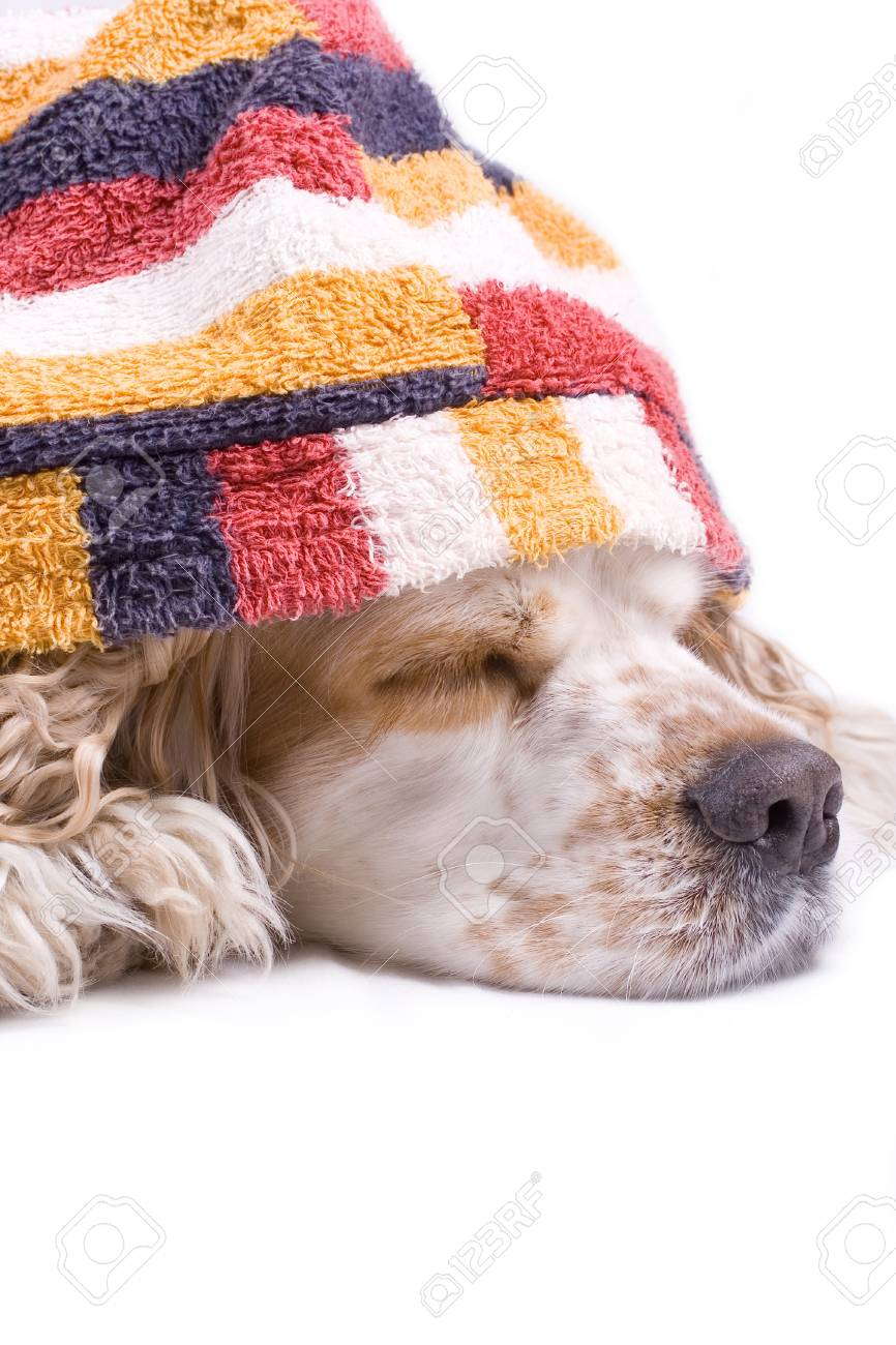 cute dog on a white background dressed up with clothes - 4177988